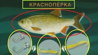 Диалоги о рыбалке рыбалка весна