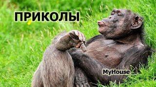 ПРИКОЛЫ С РОКОВЫМ СТОЛОМ!!! НЕУДАЧИ НА СТОЛЕ!!! MyHouse #172 ЯНВАРЬ 2018