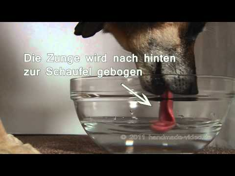 Ist die Filme Mager- wo abmagern