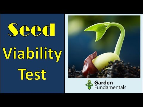Improved Seed Germination Test - easily test seed viability baggy method