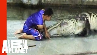 Man Caught In Crocodile Death Roll | Untamed & Uncut