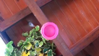 preview picture of video 'Colibri - Hummimbird - Guest House Puerto Iguazu'