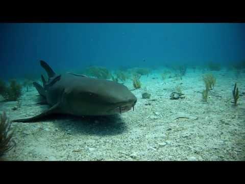 Shark Dive Bahamas, Fish Tales,Bahamas