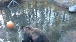 1051112  熊表演 II