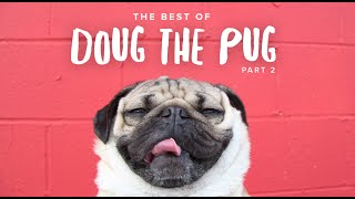 Best Of Doug The Pug - Part 2