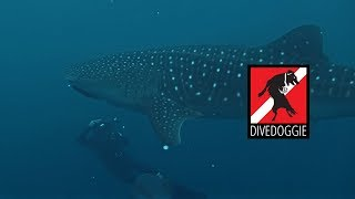 Costa Rica Expedition: Whale Sharks