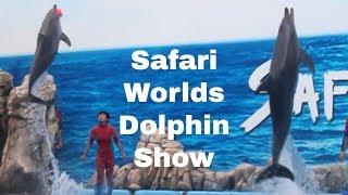 Dolphin Show At bangkok