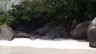 preview picture of video 'Platform Beach, St. Thomas, USVI - Immersion Traveling'