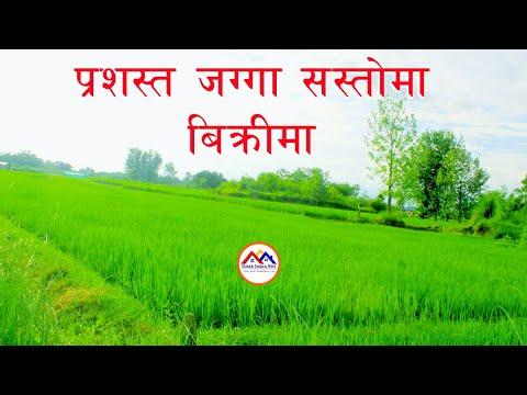 बाटोको निकास भएको अतिनै मिलेको जग्गा बिक्रिमा   Land for sale near Bardaghat   Nawalparasi Nepal