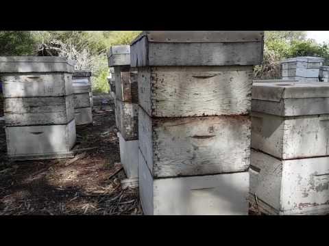 пчеловодство.профессиональная пасека в Израиле