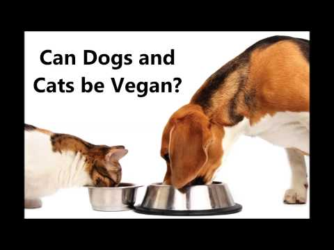 Can Dogs and Cats Thrive on a Vegan Diet?