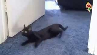 Прикольные игривые коты
