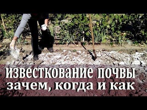 Как и когда известковать почву осенью  Зачем известковать почву
