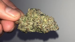 gelato cake seeds - Free video search site - Findclip Net