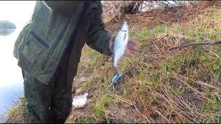 Рыбалка летом на реке