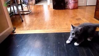 Смотреть онлайн Коты на паркете