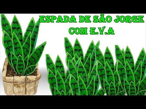 planta Espada de São Jorge