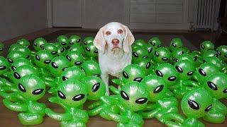 Dog vs Baby Aliens Invasion! Funny Dogs Maymo & Potpie Befriend Baby Aliens in UFO