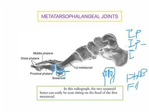 Durere în articulațiile genunchiului cum să scapi