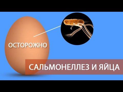 ОСТОРОЖНО: САЛЬМОНЕЛЛЕЗ и ЯЙЦА! (часть 5) \ Все про куриные яйца - должен знать каждый о сальмонелле