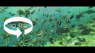 SCUBA MALDIVES 360° 3D VR Underwater