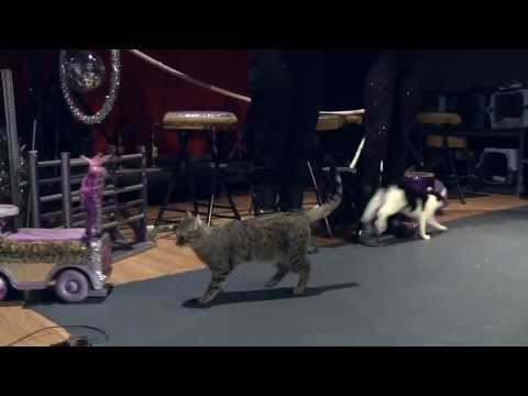 Pet World Insider Presents – The Amazing Acro-Cats and Tuna and the Rock Cats