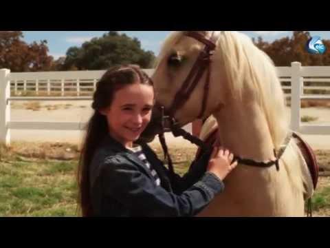 Cheval & Poney : Poney Ranger PC
