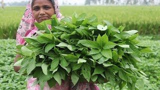 Village Food Pater Patar Bora Recipe Farm Fresh Yummy Jute Leaves Bora Cooking Ramadan Special Ifter