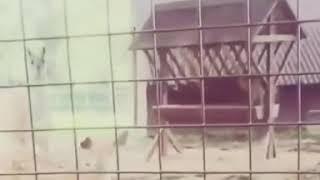 Называется повторила!Пипец/ПРИКОЛ