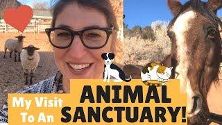 My Visit to Best Friends Animal Sanctuary in Utah! || Mayim Bialik