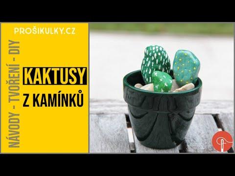 Video v článku Kamínkové kaktusy
