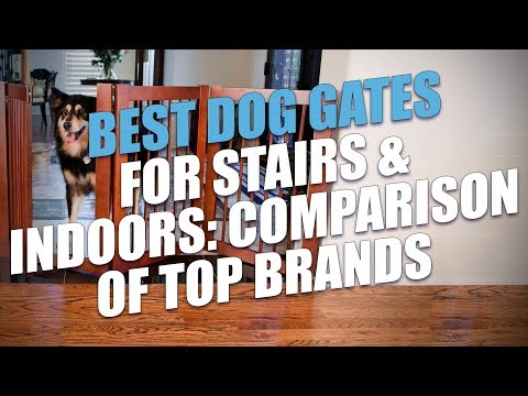 Best Dog Gates Comparison And Testing (2018)