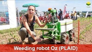 Oz, the weeding robot for smaller vegetable producers