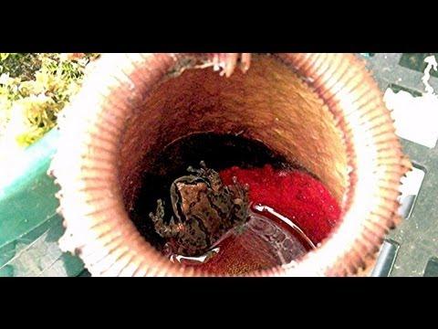 อาการ Giardia ในลำไส้