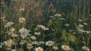 Kung Pwede Lang Official Music Video | Eurika