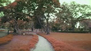 "Cruising around ""Taman Jepun"" | FPVLife"