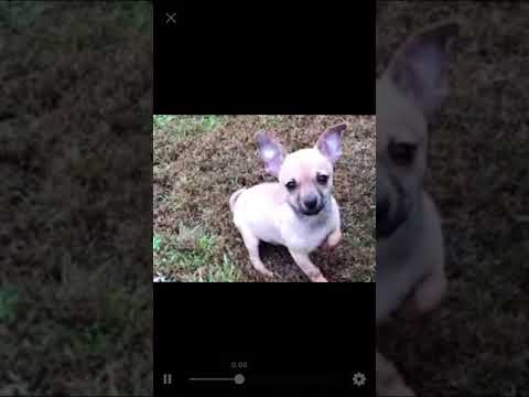Here's a sweet video of rambunctious Poncho playing with his brother Toby!!! They have so much fun t