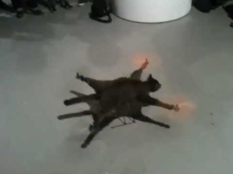 This Is Why You Can't Use A Cat As A Quadrotor
