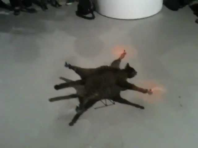 هولندي يحول قطته الأليفة إلى طائرة مروحية