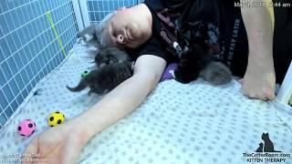 Guardian Kitten Time lapse