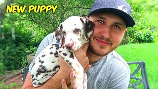We Got a New Puppy!