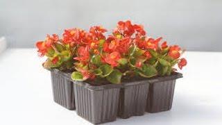 Какие цветы сеять в феврале?