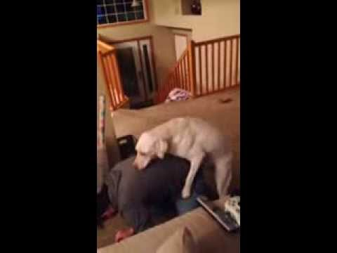 Dog Humps Human