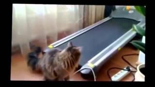 Смешные кошки нарезка за декабрь 2013