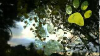 Djavan - Lobisomem