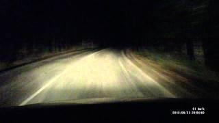 Олень на дороге