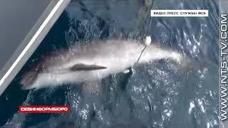 18.05.2018 В Черном море в сетях украинских браконьеров погибло 46 дельфинов
