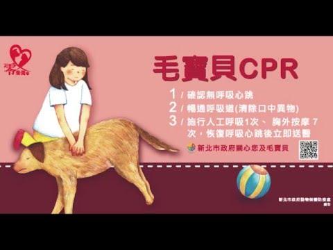 毛寶貝CPR