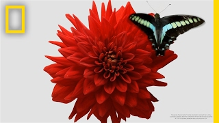 What a lovely video of flowers and insects