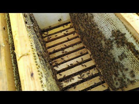 Отбор товарного мёда Формирование гнёзда в зиму